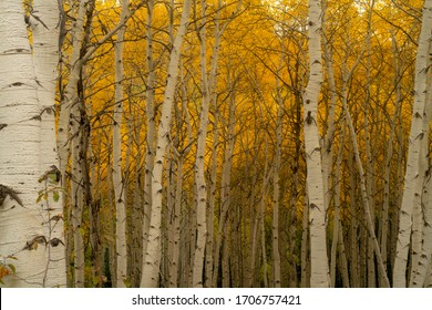 Beautiful autumn on mountain the scenic country road aspen tree are turning to yellow, Colorado