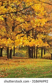 Beautiful Autumn Park