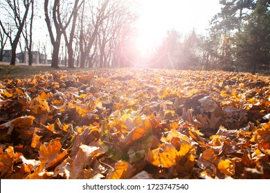 美しい秋の公園。 美しい秋の風景。