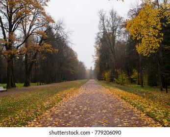 Beautiful autumn park. Autumn in Oranienbaum, Saint Petersburg. Trees and leaves. Landscape.Park Forest
