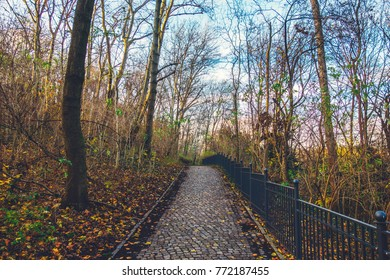 beautiful autumn park with path in the middle