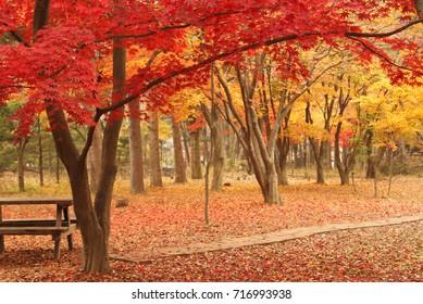 Beautiful Autumn park in South Korea