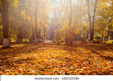 Beautiful autumn park with the yellow trees in sunny weather