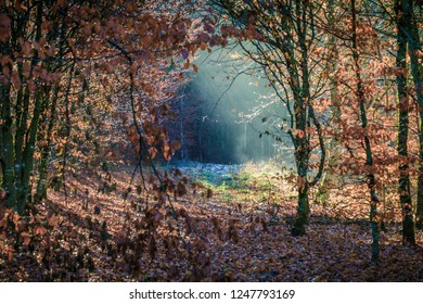 beautiful autumn ray of sunshine passes through the black forest, germany