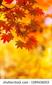 beautiful autumn red leaves background
