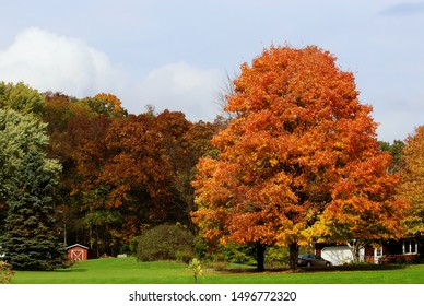 Beautiful autumn rural landscape. Scenic countryside fall view with cloudy sky over colorful forest, buildings between trees and beautiful bright color maple in a foreground. Midwest USA, Wisconsin.
