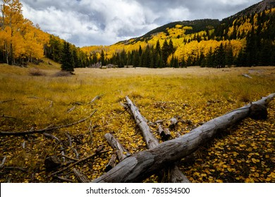 A beautiful autumn scene with golden aspen trees in the background and the fallen log in the foreground.Cloudy sky with yellow aspen trees. Autumn scenery.