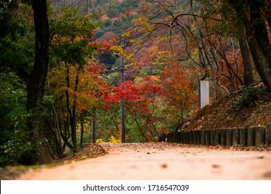 Beautiful autumn scene of Japan