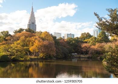 Beautiful autumn scenery at Shinjuku Gyoen Park at Tokyo, Japan.