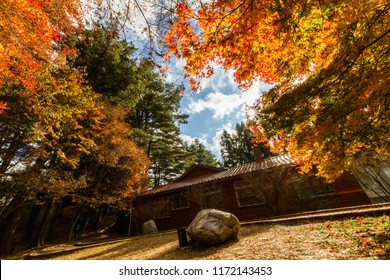 Beautiful autumn scenery in Taiwan, Asia. The fallen leaves beautiful color picture, Beautiful Japanese Wooden House and Maple Red Leaves at Fushoushan, Taichung, Taiwan