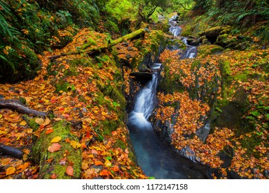 Beautiful autumn scenery in Taiwan, Asia. The fallen leaves make the stream a beautiful color picture (108K) asia, Taichung, Nantou