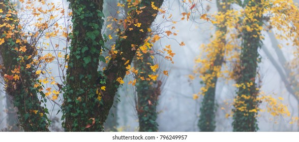 Beautiful autumn scenery in the woods, with fog and autumn foliage