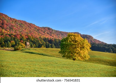 Beautiful autumn scenery. Yellow Oak tree, hunting cabine, green meadow and colorful forest. Landscape under blue sky.