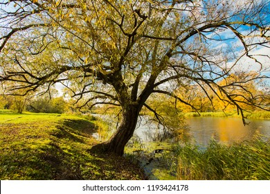 Beautiful Autumn Scenic Landscape Of Old Tree Willow By River At Sunset Close Up.