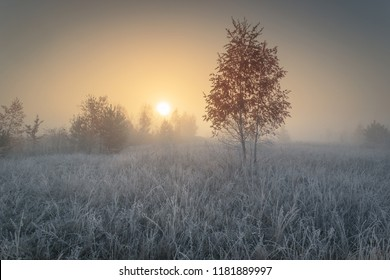 Beautiful autumn sunrise landscape with birch tree on foggy meadow and hoarfrost on the grass.