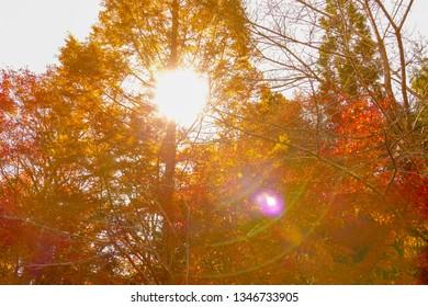 Beautiful autumn sunshine