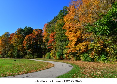 Beautiful autumn tree lined walkway with gorgeous fall colors along the path.