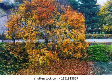 beautiful autumn tree in the park