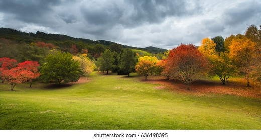 Beautiful autumn trees in the Adelaide Hills