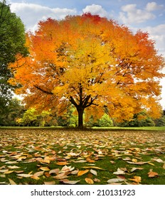 Beautiful autumn trees. Autumn landscape.