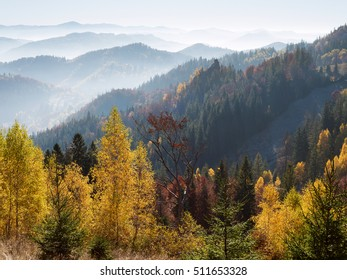 Beautiful autumn trees on the mountain slopes. Deciduous forest with red and yellow leaves. Morning haze