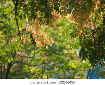 The beautiful autumn view in the city with the warm sunlight