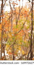 La hermosa vista del otoño con las coloridas hojas del otoño en el parque