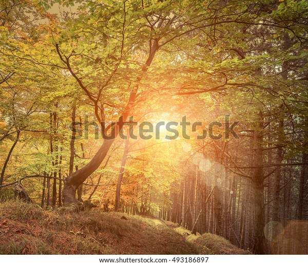 Beautiful autumn view in forest.