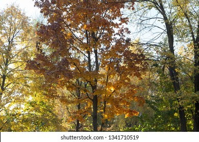 Beautiful autumn view in parks of Chisinau. It is very nice image.