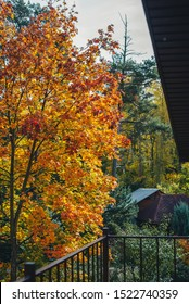 Beautiful autumn view in the suburbs