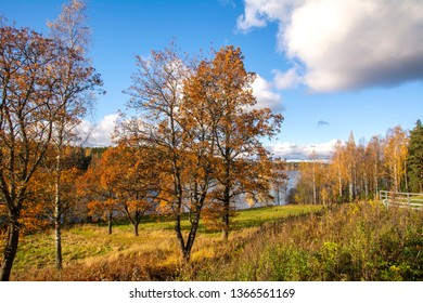 Beautiful autumn view, yellow trees and Nuuksio lake on the background, Espoo, Finland