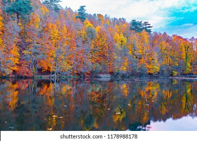 Beautiful autumn views of Buyuk Lake in Yedigoller National Park. Reflection of trees. Exciting images. Colored leaves. Falling leaves. Yedigoller, Bolu, Istanbul, Turkey.