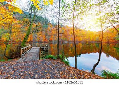 Beautiful autumn views of Buyuk Lake in Yedigoller National Park. Reflection of trees. Wooden pier. Colored leaves. Falling leaves. Yedigoller, Bolu, Istanbul, Turkey.