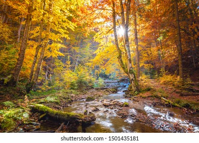 Beautiful Autumn in wild forest - vibrantl forest trees and fast river with stones