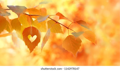beautiful autumn yellow birch leaves. Autumn Landscape background. Fall abstract background with golden birch. autumnal nature forest backdrop for design.