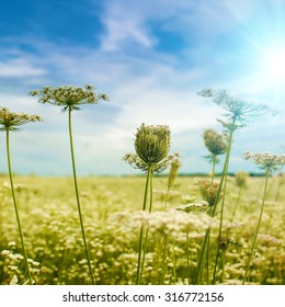 Beautiful autumnal backgrounds with wild flowers under blue skies