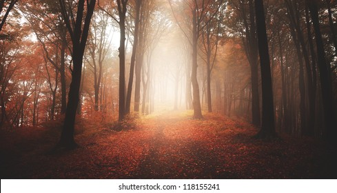 Beautiful autumnal forest into the morning light