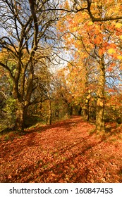 Beautiful autumnal landscape in the park