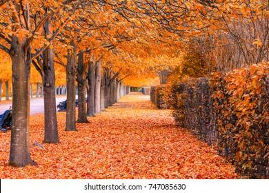 Beautiful autumnal scenery of tree tunnel in regent's park, London