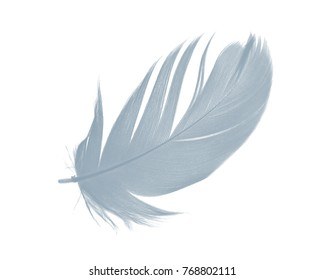 Beautiful Baby blue colors tone feather isolated on white background ,trends color 2018