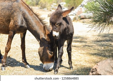 Beautiful baby donkey with his mother