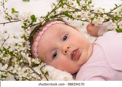 Beautiful baby girl lying at blossom plum branches. Studio shot on white