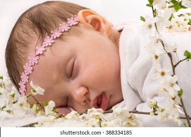 Beautiful baby girl sleeping at blossom plum branches. Studio shot on white.