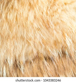 beautiful background, fur mink
