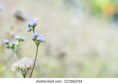 Beautiful background of grass flower.