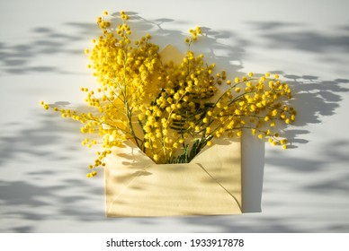 Beautiful background, mimosa on in a letter, in an envelope, shadows from flowers on a sunny day, beautiful flat lay.