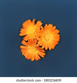Beautiful background with orange marigold flowers pattern on dark blue backdrop. Colorful abstract background. Backdrop for your design. Flat lay style. Copy space.