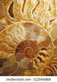 beautiful background of petrified extinct fossil shell animal Ammonite Nautilus, Jurassic and Mesozoic era, marine mollusc chamber cut in spiral shape, symbol of family happiness, wealth and eternity