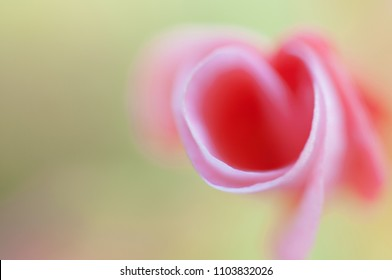 Beautiful background of Pink flower in abstract mode