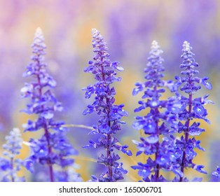 beautiful background with purple flowers